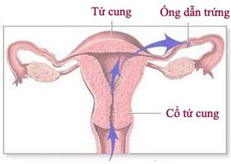 dieu-tri-viem-ong-dan-trung-nhu-the-nao
