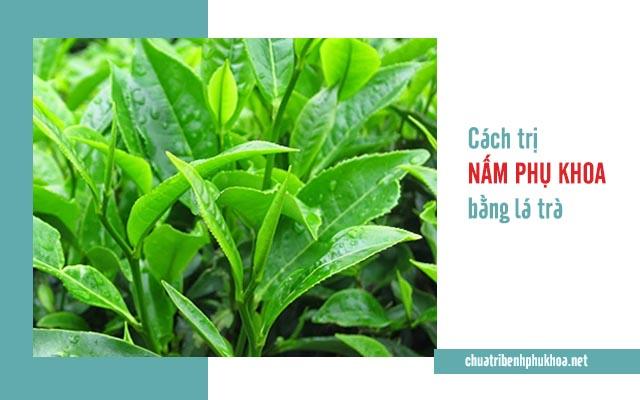Thuốc trị nấm phụ khoa hiệu quả từ trà xanh