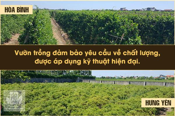 Vườn thảo dược của nhà thuốc Nam Đỗ Minh Đường