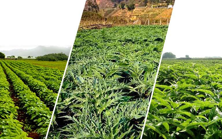 Các vùng thảo dược sạch của Trung tâm Phụ Khoa Đông y Việt Nam